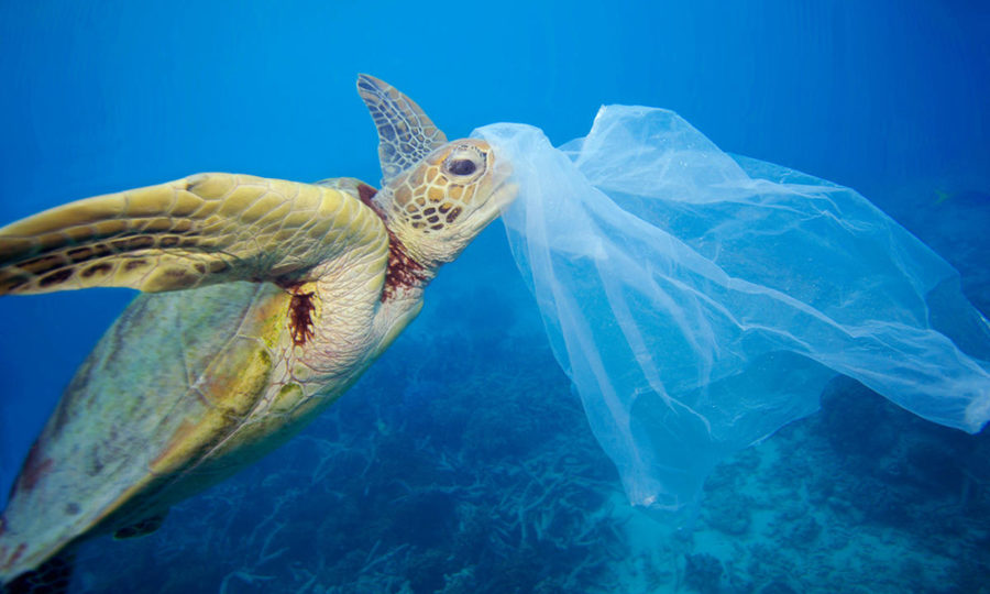 Plastic in the oceans can interfere with the lifestyle of all sea life, this often results in death for these poor animals